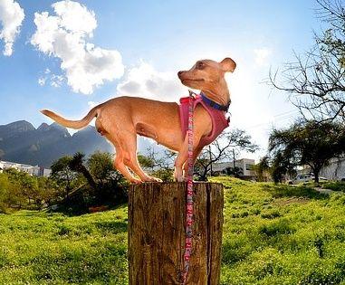 Los perros pueden ser grandes compañeros de senderismo, nos ayudan a mantener la motivación para seguir adelante y nos satisface ver como se divierten, realmente son exploradores incansables . Par...