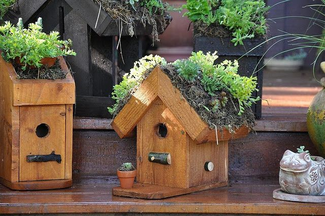 Succulent Roofs On Birdhouses Gardening Pinterest So