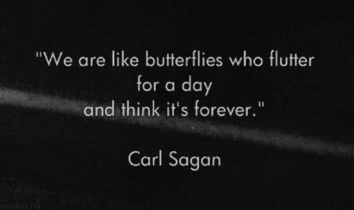 Sagan: Inspiration, Life, Quotes, Butterflies, Carl Sagan, Carlsagan, Thought