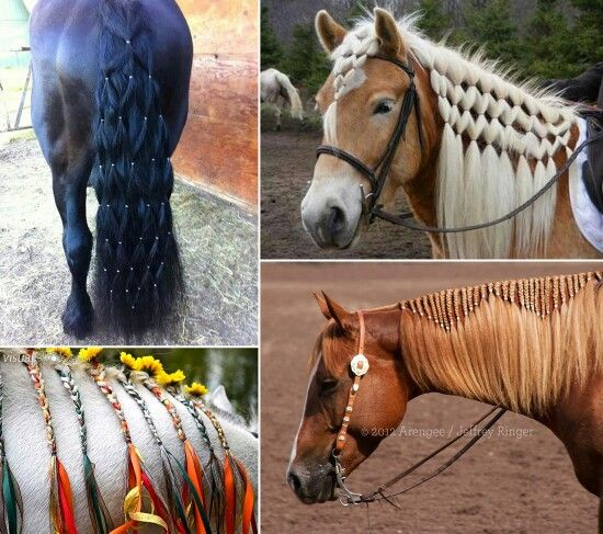 horse mane hair styles 100 ideas to try about horses arabian horses palomino 5694 | 806b9c9c71dca0abbbc1559223386a9b