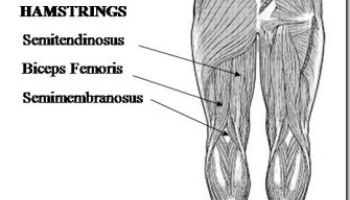 Hamstring Pull Recovery: The Rehab, Part 1