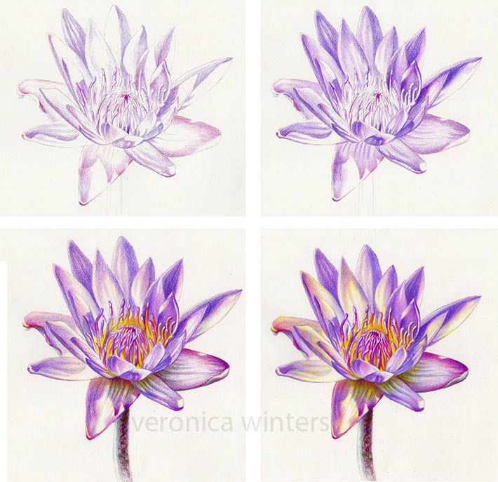 4 Colored Pencil Techniques You Need to Know - steps in layering colored pencil …
