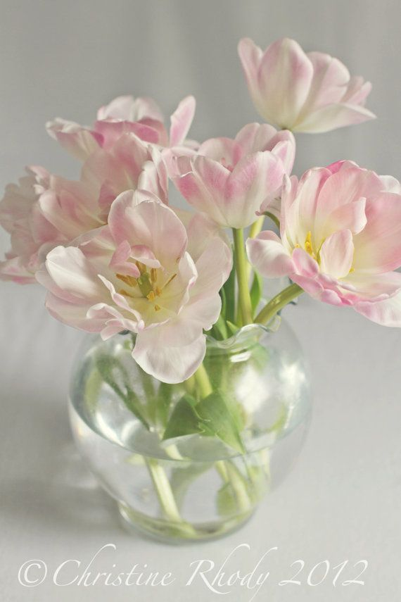 Pink and White flowers in a vase