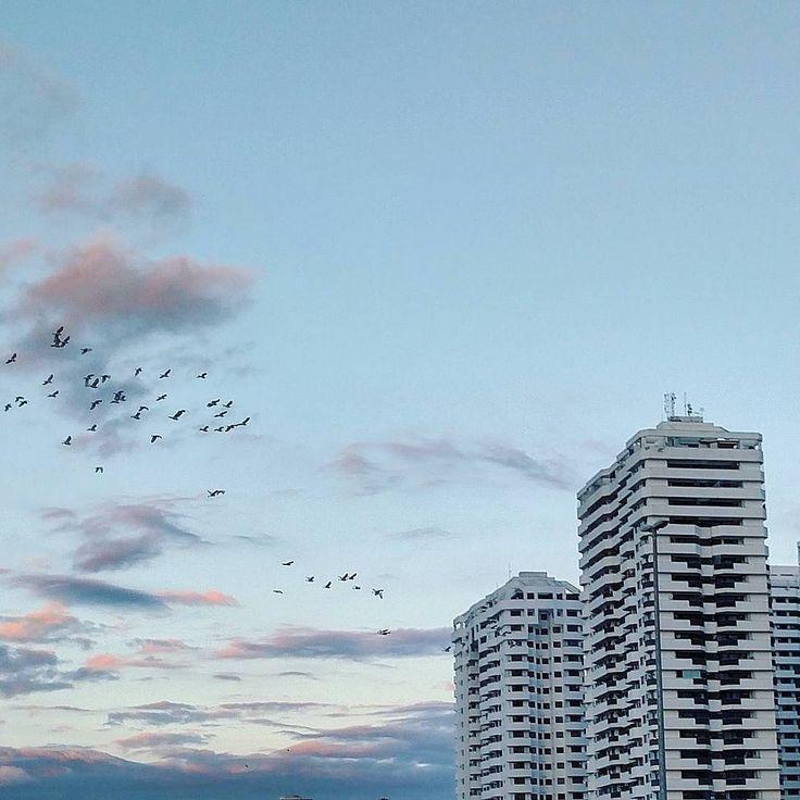 """Chega!!! Por um mundo com fotos de pássaros reais no Instagram! Tá ficando bizarro.  Dicas pra ver se a foto com pássaros é real: 1 - são poucas as espécies que voam em formação """"V"""". 2 - eles não batem as asas 100% sincronizados. Caso contrário teria uma modalidade só pra eles nas Olimpíadas Hehehe. 3 - algumas espécies circulando por aí nem existem em montanhas. 4 - pássaros carros palmeiras pôr-do-sol Aurora Boreal Via Láctea... Tudo isso com pássaros? Daqui a pouco eles vão voar até no…"""
