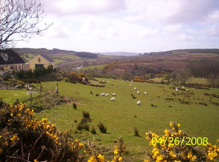 Pasture in Co. Donegal