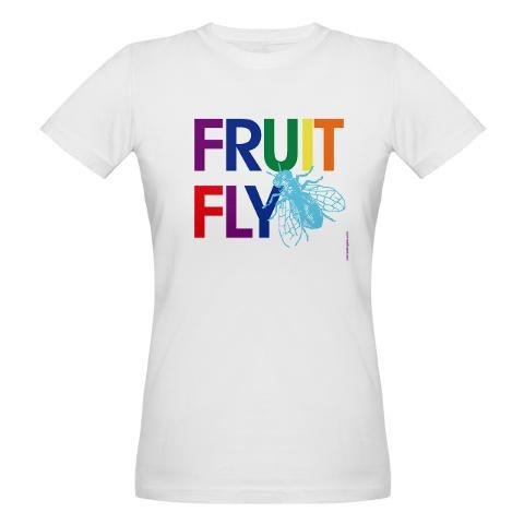 gay fruit flies