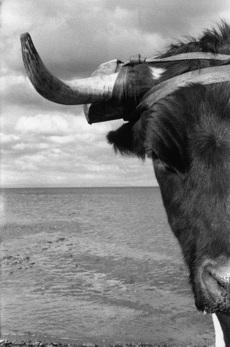 Sergio Larrain - Magellan Province. Near Punta Arenas. 1960.