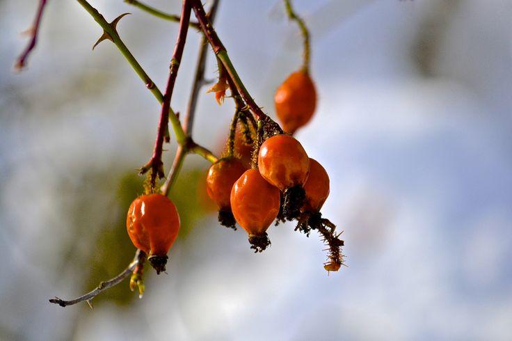 Nyper i vinterdrakt