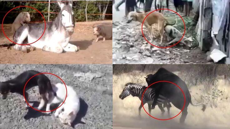 새로운 종의 동물이 탄생하는 순간! TOP8  The moment a new species of animal is born! TOP8V