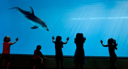 25 Best Images About Field Trip To Shedd Aquarium On