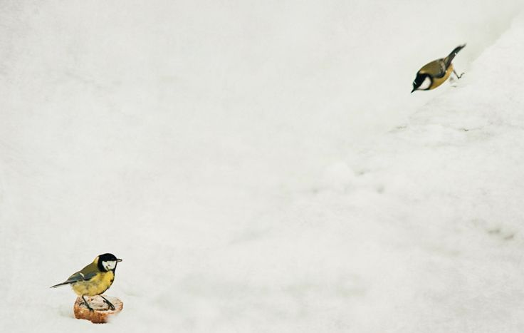 Prosjekt 365 / 4 #362 #onephotoaday #photography #birds #love #kamikaze #winter photo @jorunlarsen