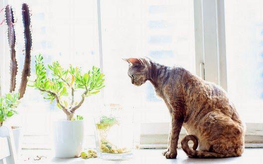Gdy kotka jest w ciąży