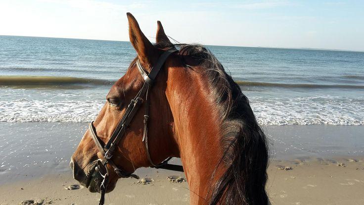 Leuke activiteiten Zeeland? Bekijk deze heerlijke strandrit. Voor ruiters maar ook voor mensen zonder paardrij-ervaring. Lieve paarden en goede begeleiding!