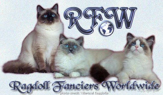 A pointed, a mitted, and a bicolor. I <3 RAGDOLLS :)