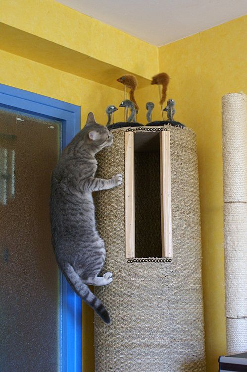DIY hollow cat tree.  Instructions in French, but the pictures are easy to follow. You could do the same with a Sonotube form.