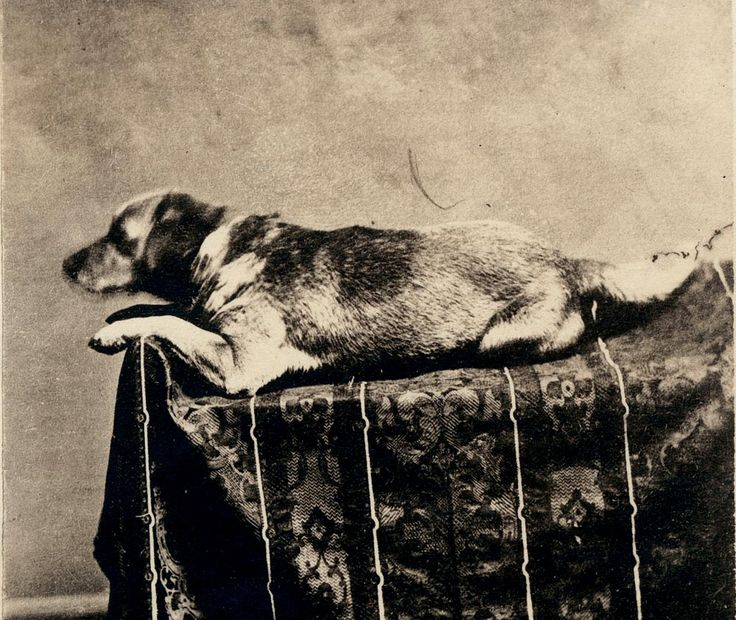 Fido - Abraham Lincoln's Dog, the first president's dog to be photographed, was also murdered like his master. A year after Lincoln's death, Fido went to lick the face of a drunk passed out. The drunk woke and seeing a dog, not knowing he was friendly to all, stabbed him to death!