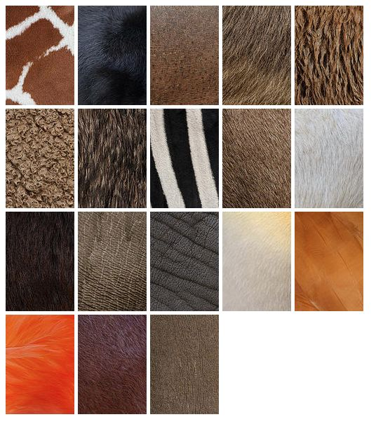 Great high resolution photos of animal skins to use for cards