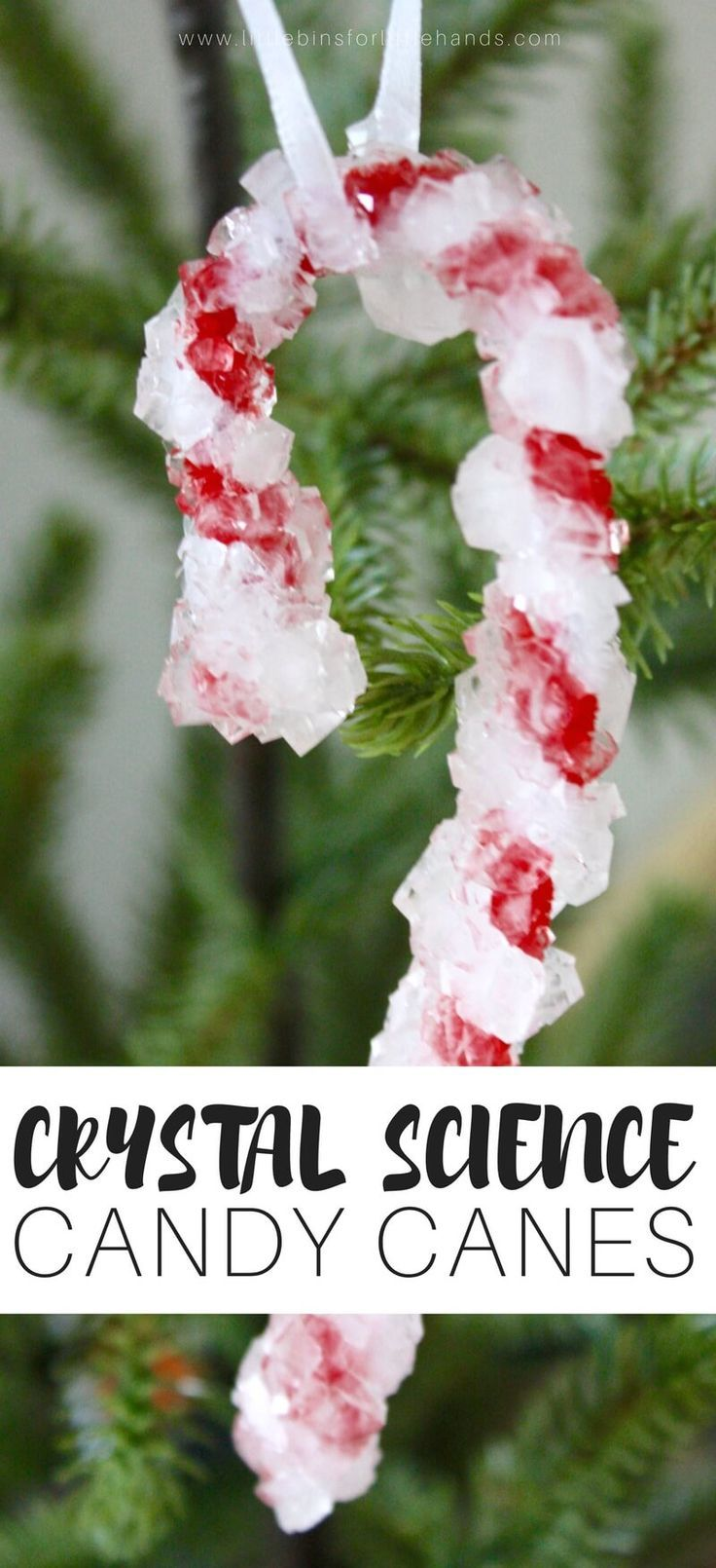 Christmas candy cane ornament crystal growing.  Learn how crystal's grow and  a bit about suspension science. STEM