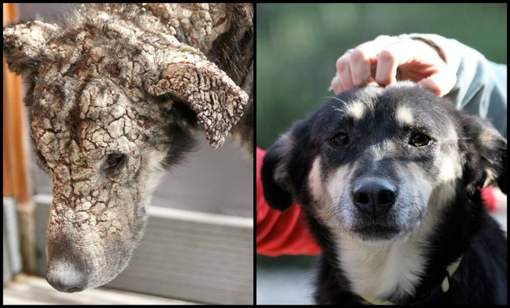 Before after pictures of these ten rescue dogs keep remining us that we have to keep fighting. All ten of them were rescued in Greece by animal welfare char