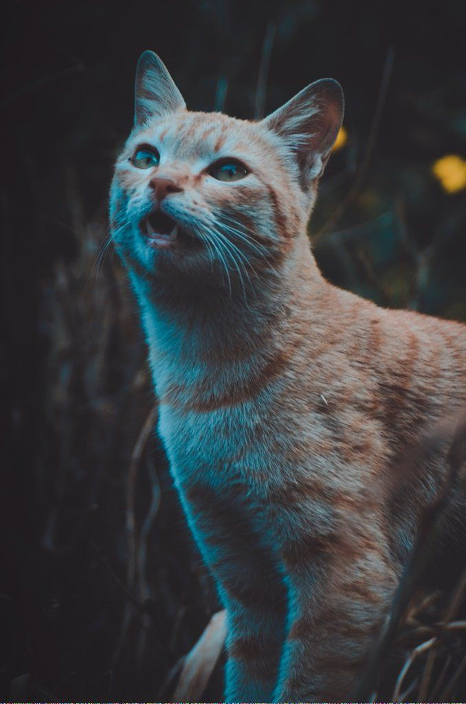 Cats For Free Near Me Tidycatscoupon Key 883943449 Why Do Cats Purr Cat Adoption Cat Hug
