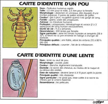 Les 25 meilleures id es de la cat gorie traiter les poux sur pinterest comment traiter les - Poux vinaigre blanc pur ou dilue ...