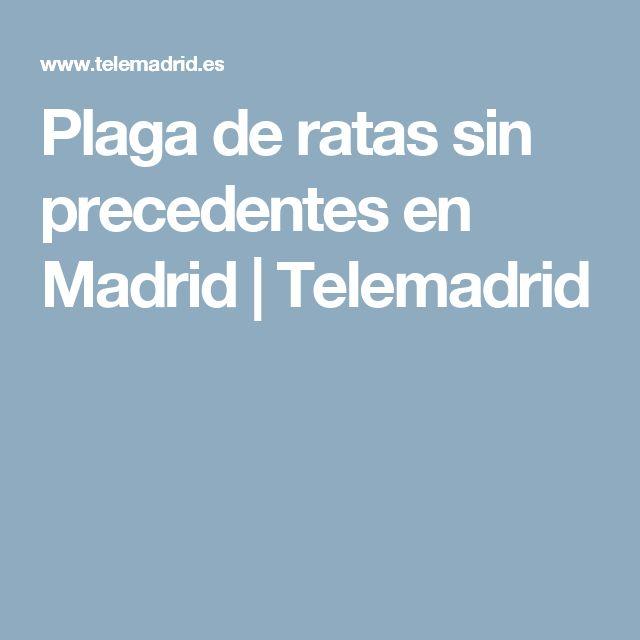 Plaga de ratas sin precedentes en Madrid | Telemadrid