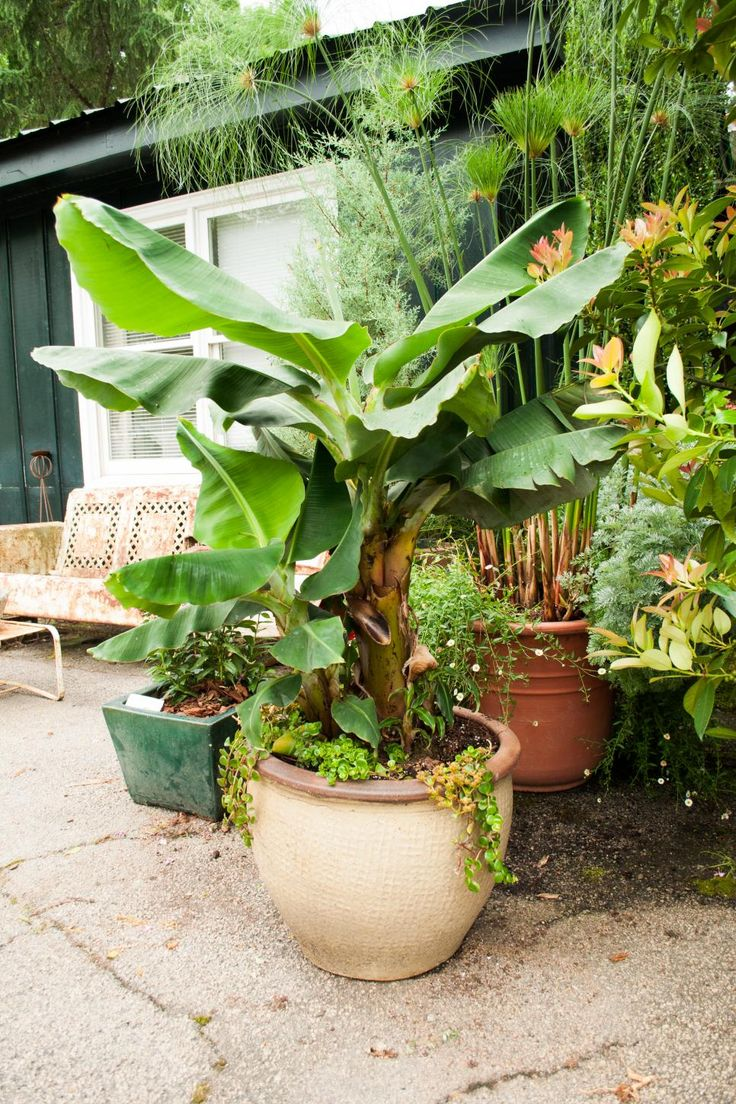 the 25 best tropical lawn and garden ideas on pinterest