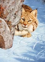 "Artist and painter Tom Mansanarez's ""Morning Snow,"" an original oil wildlife art painting of a bobcat hding behind a rock in the winter snow"