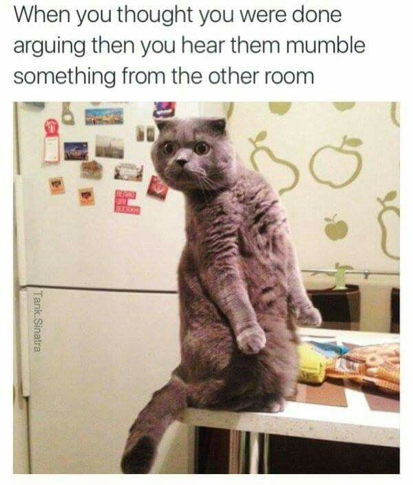 Best Funny Animals Images On Pinterest Funny Animals And - 16 funniest cat tweets 2016