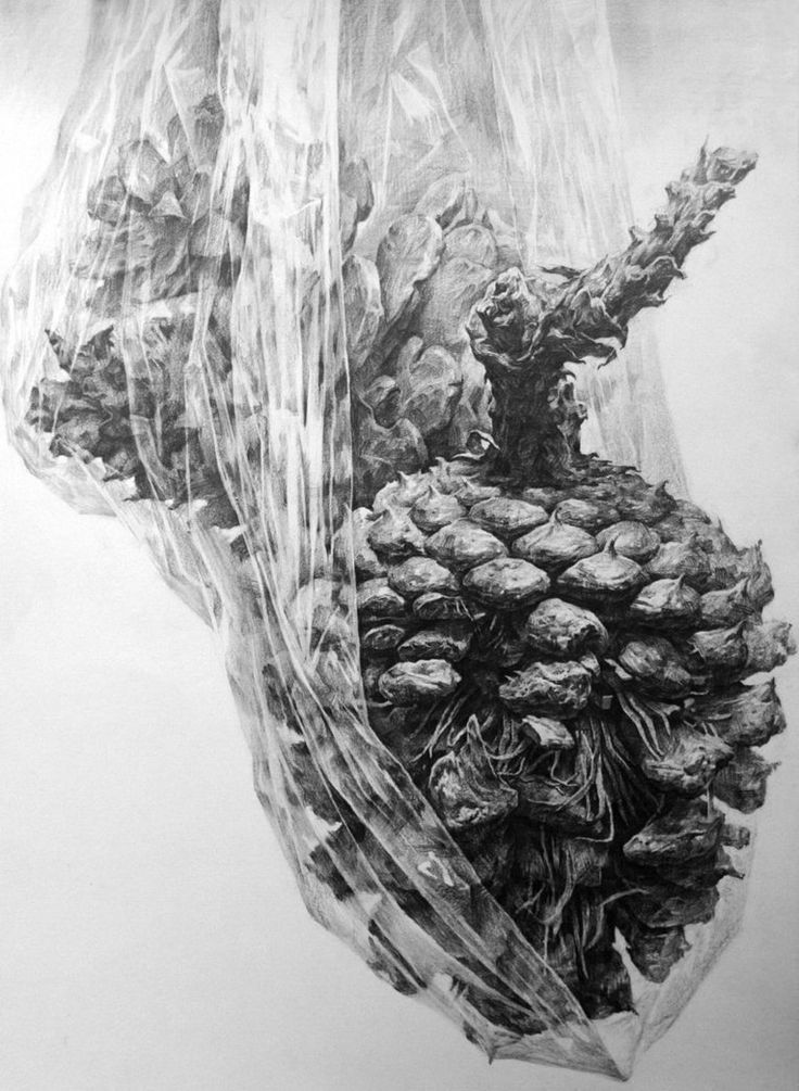 a pinecone 5 by ~indiart3612 on deviantART  amazing texture drawing