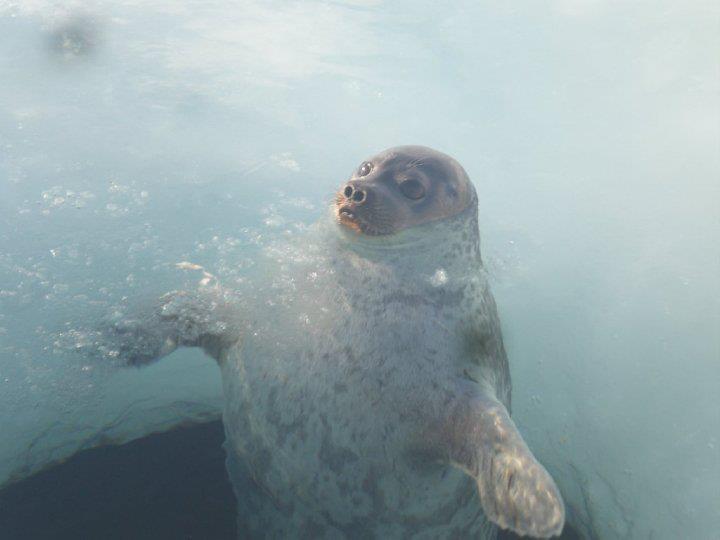 Seal photo by Bernard Maktar