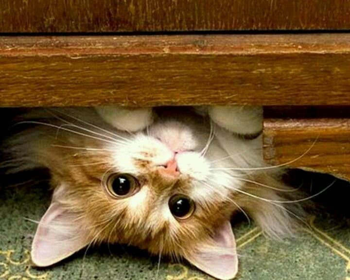 """""""Hello!  Why are you upside down, Hoomin?"""""""