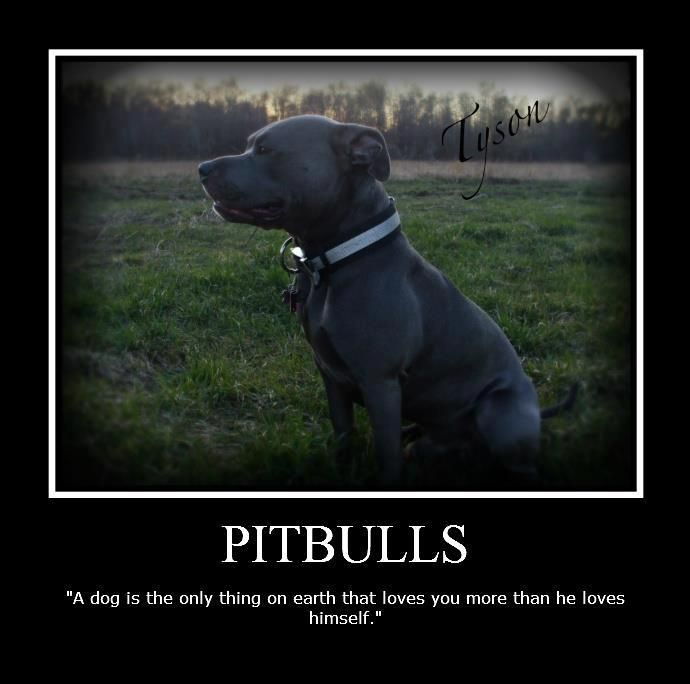 first of all this is so true.. and wanted to add this looks so similar to my dog diesel