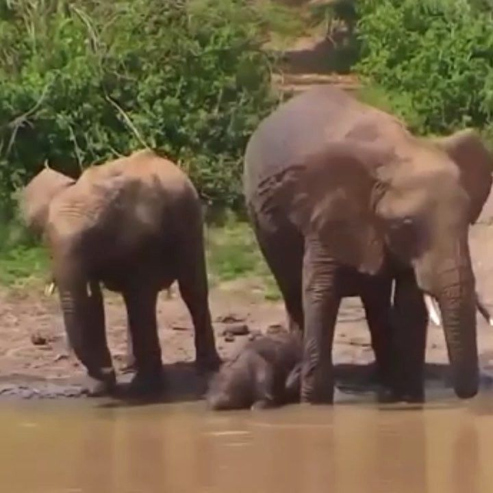 """4,457 Likes, 97 Comments - explore.org (@exploreorg) on Instagram: """"Explore is working with both the African Wildlife Foundation and David Sheldrick Wildlife Trust to…"""""""