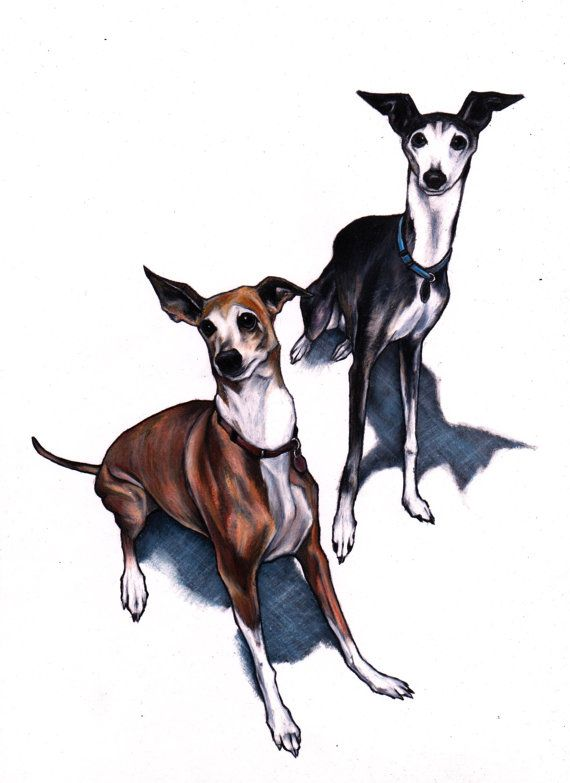 Italian greyhound art print, Iggy art images, signed giclée print, Italian…