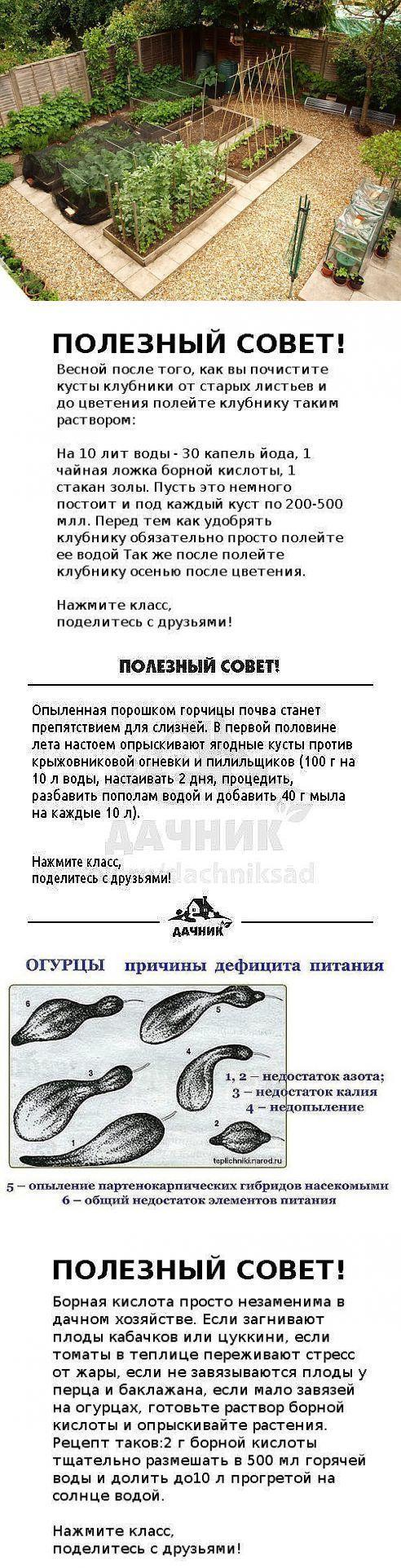 ru.pinterest.com