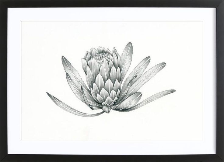 Black and White flower for wall art decor. Protea Art Print by Faunesque now on Juniqe.com   Art. Everywhere.
