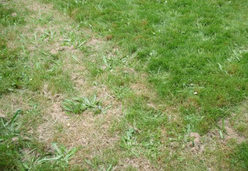 Organic Lawn Care For the Cheap and Lazy.  Love this article...TONS of great tips