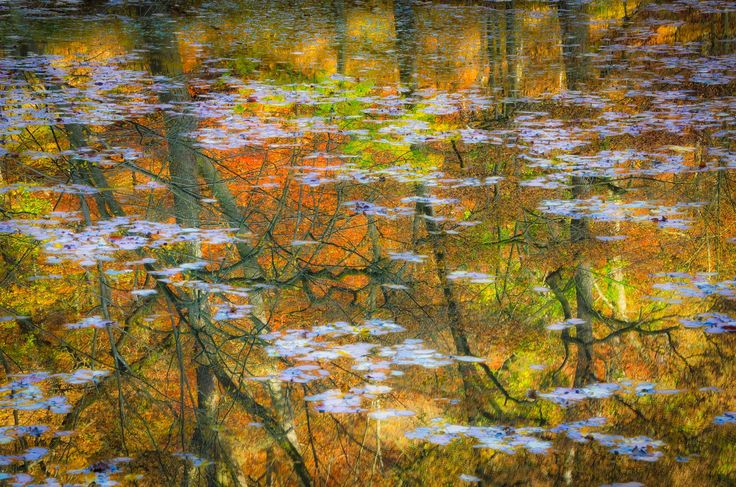 Autumn reflection - This image was selected for the final of the photography contest of 'Natuurpunt', a Belgian independent voluntary organisation for the protection of nature in Flanders.  For this image I removed my polarizing filter for once to get the optimal reflection of the autumn colours in the water. The light 'stains' are leaves that were floating in the pond.  #autumn #trees #water #reflection #abstract #fall #colors #photography #colours #herbst #herfst