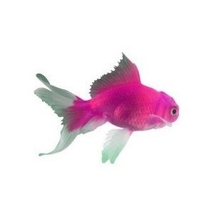 Pet fishes suck....except this one.