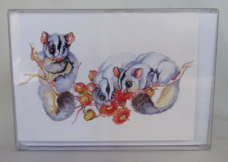 Note Cards set of six boxed Sugar Gliders. Artwork by Lynn Naismith