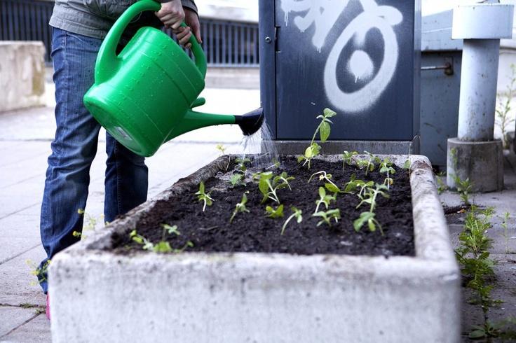 guerilla gardening in Helsinki