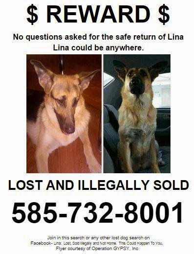 1378 best Lost and Found Pets images on Pinterest Blues, Dogs - lost pet poster