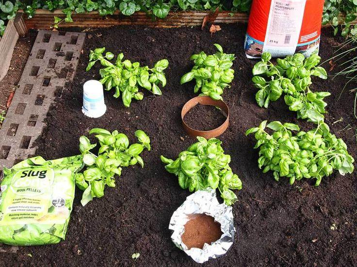 Was hilft gegen Schnecken? – Nur Gärtnern …