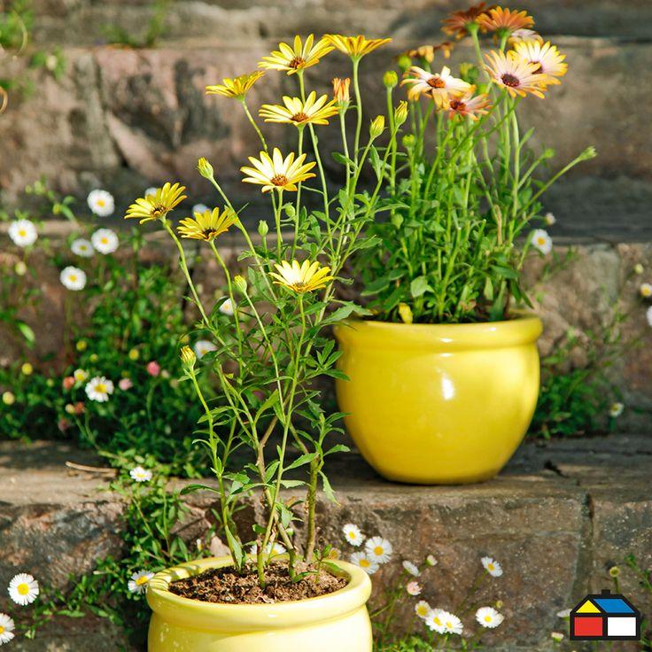 #Jardin #Maceteros #Flores #Amarillo