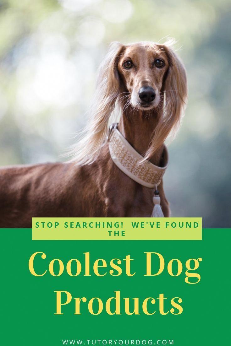 Dashing Proved Dog Training How To Stock Up Dog Training Puppy