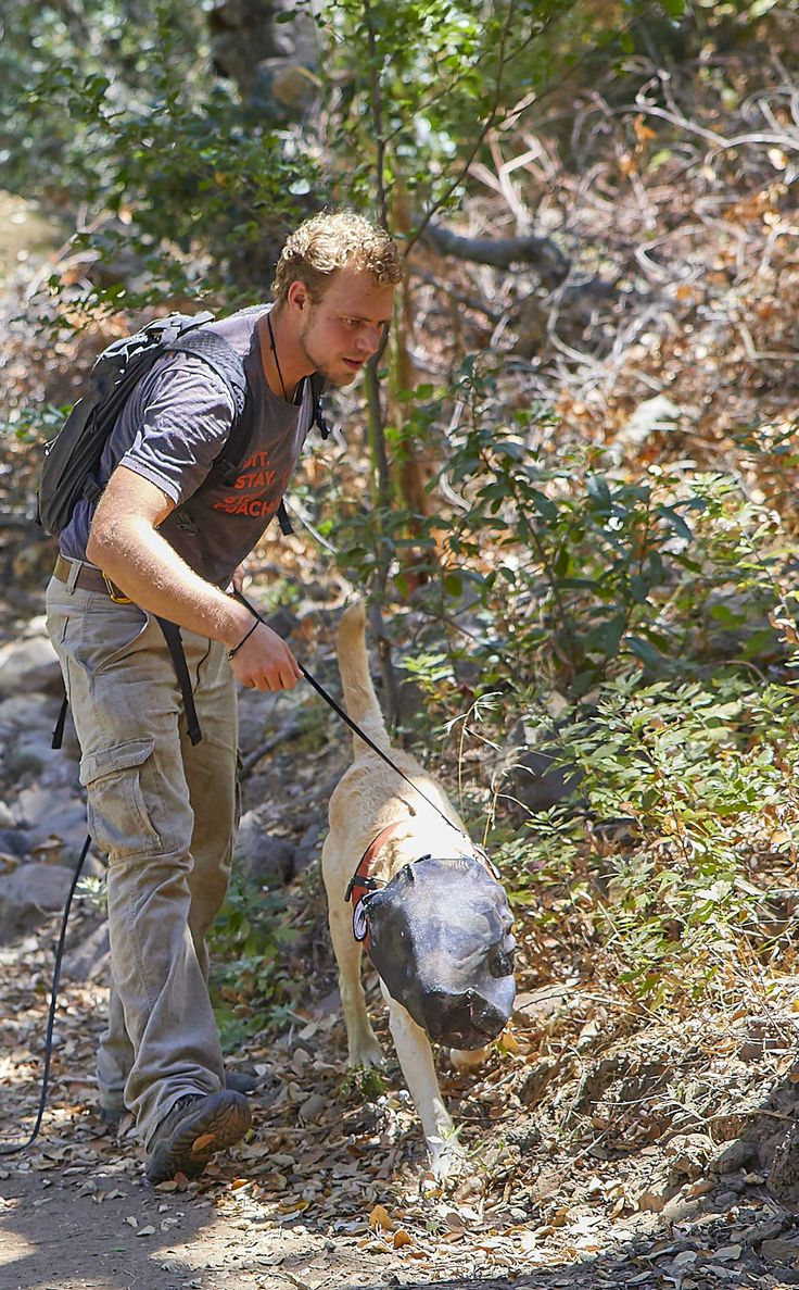 2017-09-06 03:15:17   LOS ANGELES (AP) — Scientists assessing long-term efforts to eradicate invasive ants on the Channel Islands off the Southern California coast have enlisted a four-legged expert to make sure a project to kill off the destructive pests has succeeded. A yellow Labrador named... - #Ants, #California, #Dog, #Helps, #Invasive, #Island, #Sniff, #Us