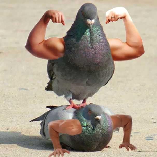 Birds With Arms | Birds with arms! | Funny birds, Birds ...