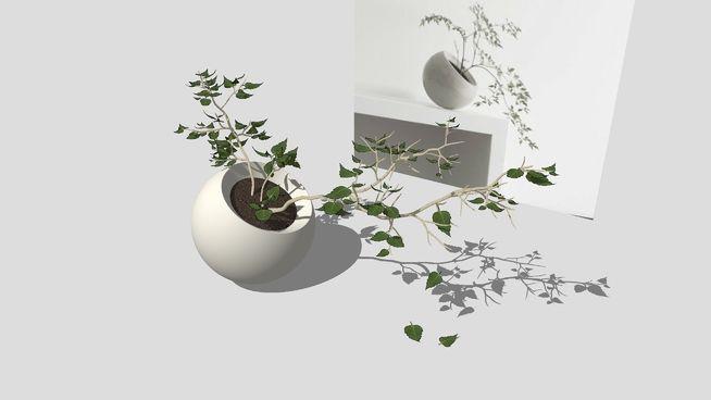 Indoor plant + Vase Комнатное растение + Ваза - 3D Warehouse