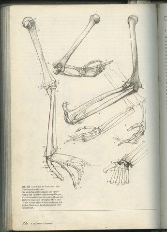 Анатомия руки. Кости